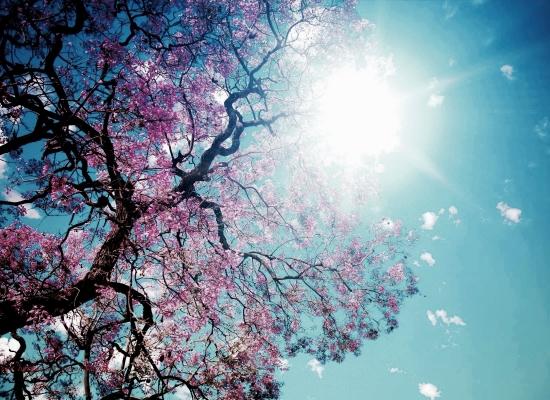 pink_petals_blue_skies_w1